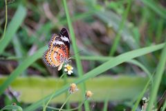 Butterfly with flower scent Stock Photo