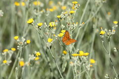 Butterfly and flower - Signs of Spring Royalty Free Stock Photo