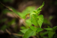 Butterfly on flower. Small butterfly on a leaves Stock Image