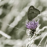 Butterfly on flower with space for text Stock Photography