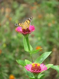 Butterfly on a flower. In the spring garden Stock Photo