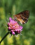The butterfly. Butterfly on the flower. Spring and warm weather. Butterfly is feeding on the flowers Stock Photography