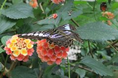 Butterfly. On flower in summer Royalty Free Stock Photos