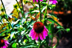 Butterfly on a flower on a summer day royalty free stock images