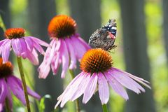 Butterfly on a flower in the summer in the garden. royalty free stock photo