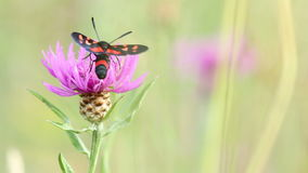 Butterfly on flower in summer. In nature stock video footage