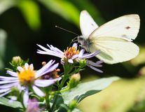 Butterfly and flower in summer nature Royalty Free Stock Photo