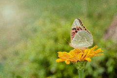 Butterfly on a flower in the summer. Painted in oil paint Stock Image