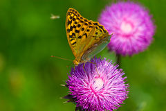 Butterfly. On flower in the sun royalty free stock photography