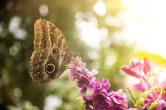 Butterfly on flower at sunglight Stock Images