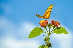 Butterfly on the flower in the sunny summer day. Royalty Free Stock Photos