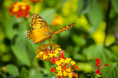 Butterfly on the flower in the sunny summer day. Stock Photography