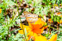 Butterfly on a flower Royalty Free Stock Image