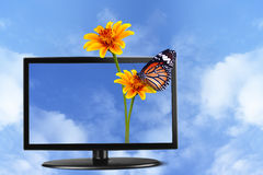Butterfly and flower on Television Stock Images