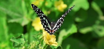 Butterfly on flower to collect honey. It is collect honey from flower garden stock photo