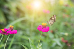 Butterfly on flower in tropical garden Stock Image
