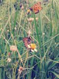 Butterfly on flower vintage style Stock Image