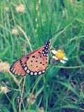 Butterfly on flower vintage style Stock Photography