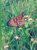 Butterfly on flower vintage style Royalty Free Stock Photo