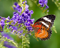Butterfly on flower royalty free stock image