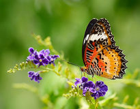 Butterfly on flower royalty free stock photography