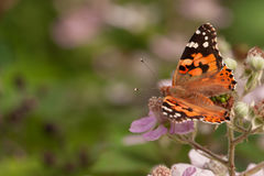 Butterfly on a flower. On a warm day stock photos