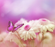 Butterfly on flower. Butterfly on the white flower. Summer garden stock photography