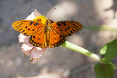 Butterfly. On flower, wings spread Stock Photo