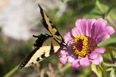 Butterfly. On flower, wings spread stock photo