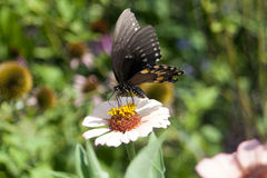 Butterfly. On flower, wings spread stock images