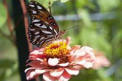 Butterfly. On flower, wings spread royalty free stock image