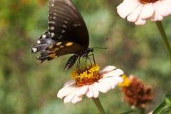 Butterfly. On flower, wings spread stock photos