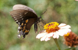 Butterfly. On flower, wings spread royalty free stock images
