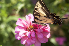 Butterfly. On flower, wings spread royalty free stock photography