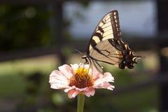 Butterfly. On flower, wings spread stock image