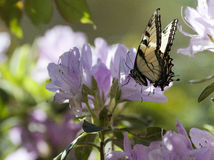 Butterfly. On flower, wings spread royalty free stock photos