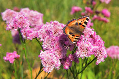 Butterfly on the flowers Stock Photo