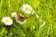 The butterfly and flowers Stock Image