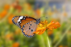 Butterfly flowers. Royalty Free Stock Photos