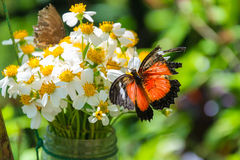 Butterfly on flowers Stock Photos