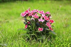 Butterfly flowers. Butterfly flowers in greensward Stock Photography