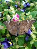 Butterfly. And flowers Royalty Free Stock Image