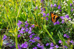 Butterfly in flowers Royalty Free Stock Photography