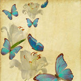 Butterfly and flowers  grunge Stock Image