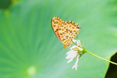 The butterfly on the flowers Stock Photography