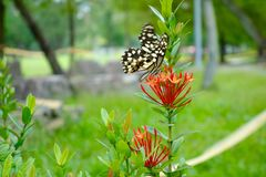The butterfly. The flowers come out and many bees and butterflies are flying among the flowers Stock Photo