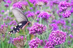 Butterfly and flowers Royalty Free Stock Photos