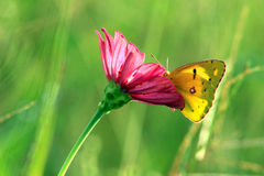 Butterfly on the flowers. Flower gardening, flowers, beautiful butterfly in flower branches, enjoying the flowers, the harmonious ecological environment Stock Image