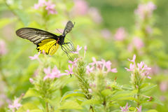 Butterfly flowers Stock Images