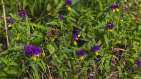Butterfly on flowers Stock Images